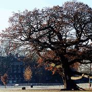 Celebrating Trees and Tree Charter Day: A focus on Urban Trees and Treeconomics