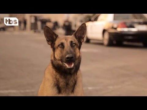 Baghdadi Dog Preparing to Appear in Trump Campaign Ad
