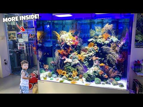 Incredible Fish Store Tour in Singapore! Freshwater and Saltwater Aquarium Fish