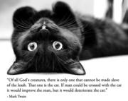 cat-black2