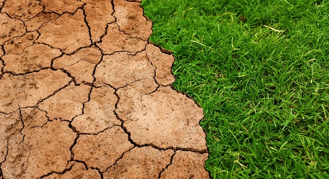 High acidity in soils killing agriculture sector