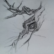 FREE - Start Drawing Trees and Nature