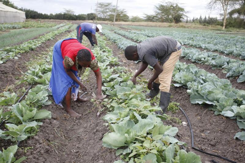 Smallholder farming is key to job creation