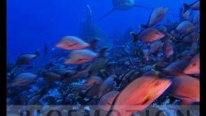 Biosmotion - In the heart of the oceans - showreel René Heuzey