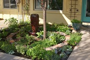 Spiral Potager at front entrance: 8 months later