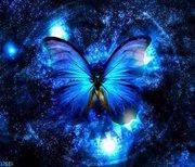 Gothic Butterflies.