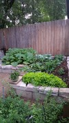 young garden