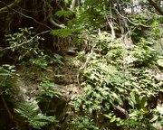 Fern Canyon 1