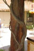 treevines