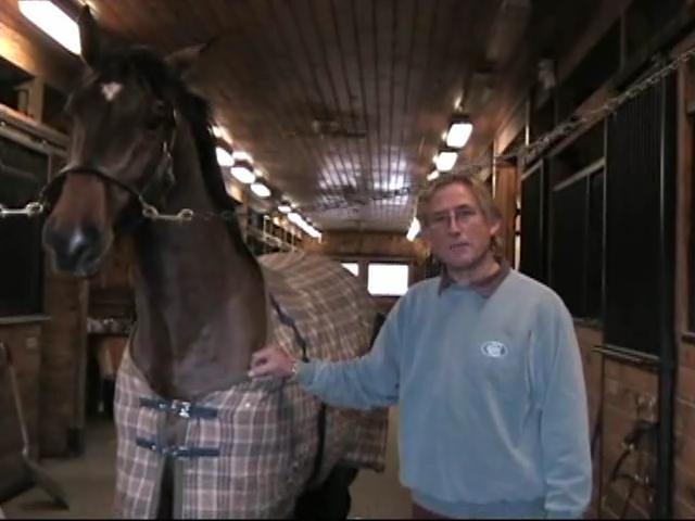 Farrier Barney Cummings: Horse Pre-Purchase Advice