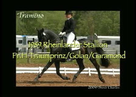Tramino - Rheinlander stallion; approved Canadian Warmblood