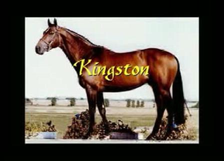 Kingston - Approved Canadian Warmblood stallion