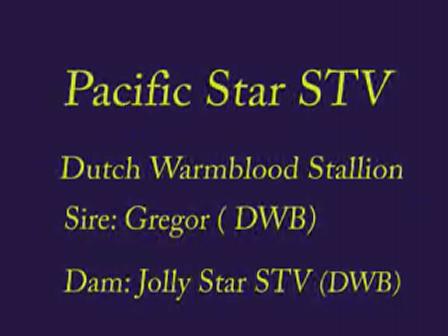 Pacific Star STV - Travis Hall Stallion