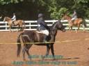 Janie & Mercury Appy July 13 2008
