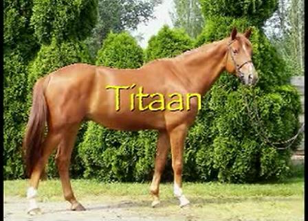 Titaan - 2002 CWHBA gelding - **SOLD**