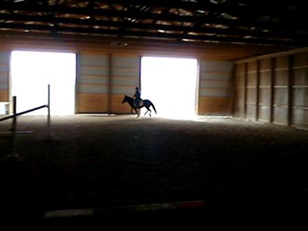 Jen & Sugar. Pony for sale!!!
