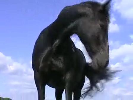 Hop on a Horse Horsemanship