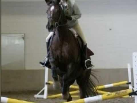 2008 / 2009 CARD Equestrian Clinic Series - Mac Cone Clinic