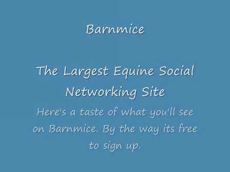 Barnmice - The Largest Equine Social Networking Site!