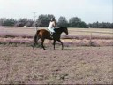 Me and my new horse Mickey jumping!!