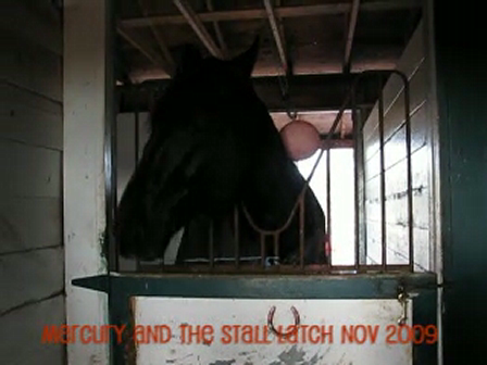 Mercury and his stall latch Nov 2009