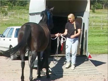 Horses with Problems 09 -  Tafir part 2