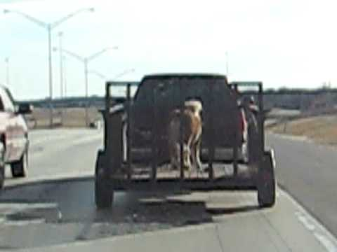 Horse Transportation is Definitely Different in Oklahoma!