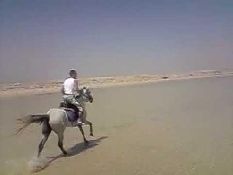 horse riding, makida bay. egypt