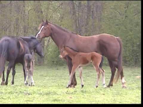 AQHA Stallion Justa Tad Rad joining the herd