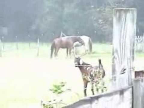 Horses In The Mist  Mr. Jim's  17 Sept 2005