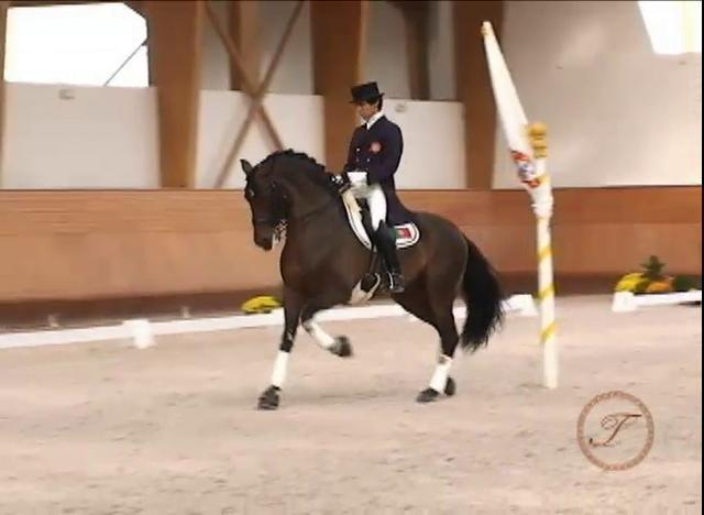 A Video for Lovers of Baroque Classical Dressage