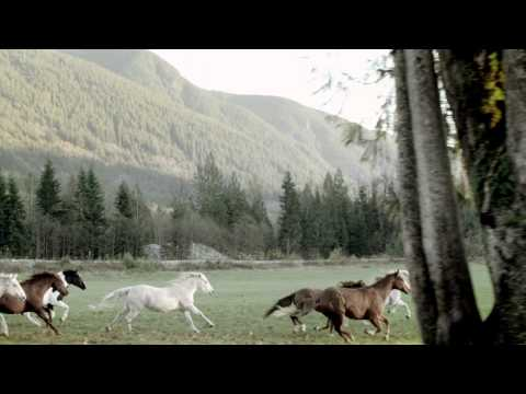 Blackberry Goes Equestrian With Their Latest Commercial