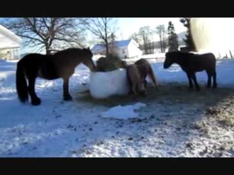 The horses this winter