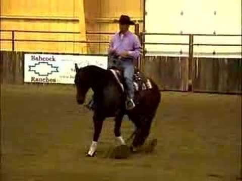 Clinton Anderson Riding Diez Bridleless