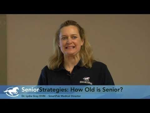 Senior Horse Strategies Part 1: How Old is Senior?