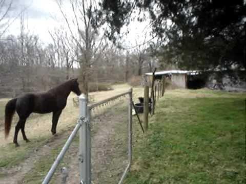 CUTE! Horse/Dog BFF