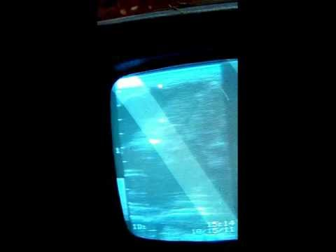 Horse Ultrasound