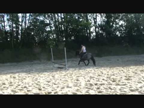 """""""adult"""" jumping Shetlands ;) - with Pif & Paf"""
