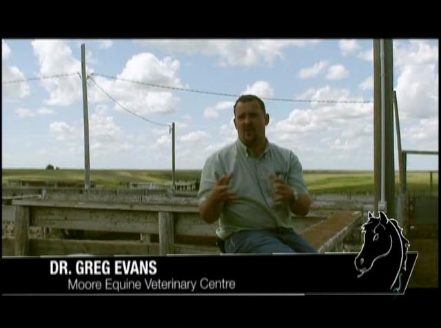 The Horse's Mouth TV Episode #9 Dr. Greg Evans at Calgary Stampede Ranch