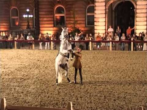 Take a Look at Dressage in Hungary