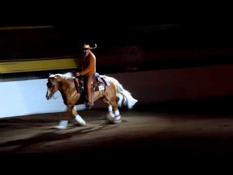"2012 Freestyle Reining Champion Show Winner - ""Tequila!"""