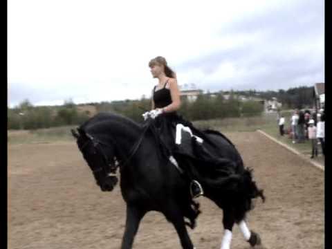 """""""Black and White"""" - A Beautiful Friesian Pas de Deux"""