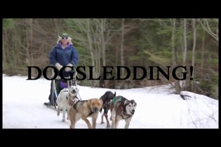 March Break Dog Sledding