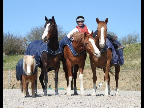 A Day in the Life of a Horse Trainer