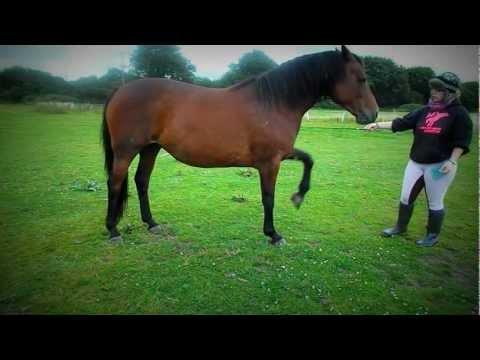 Liberty Horsemanship