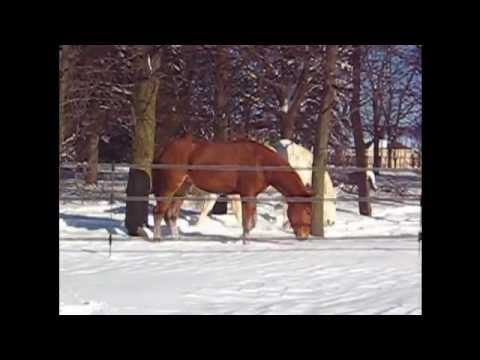 HorseGuard Bi-Polar Fencing System: Electric Fencing without Grounding