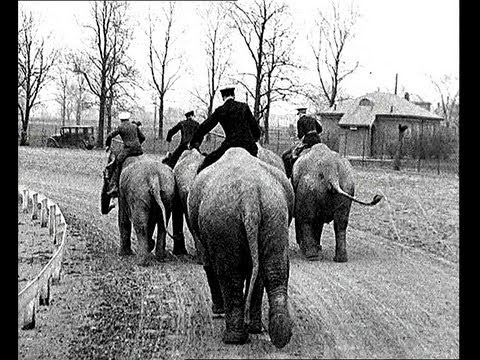Elephant Racing - The New American Sport of 1935