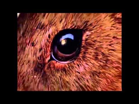 20seconds to the future full DVA Digital Video Album