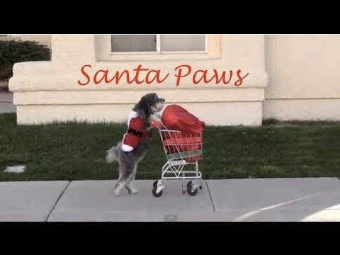 Dog Saves Christmas- SANTA PAWS