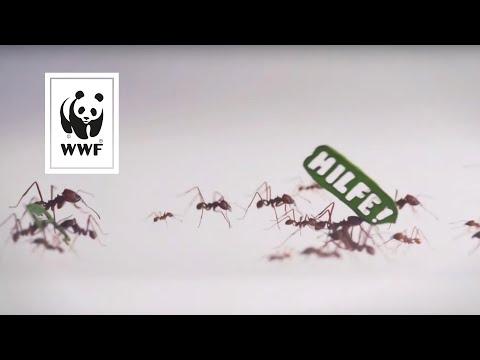 Ameisen demonstrieren für den Schutz des Regenwaldes! #VivaAmazonia